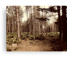 Forest 15 Canvas Print