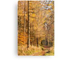 Autumn colours, riverside walk, November 2103  Metal Print