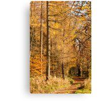 Autumn colours, riverside walk, November 2103  Canvas Print
