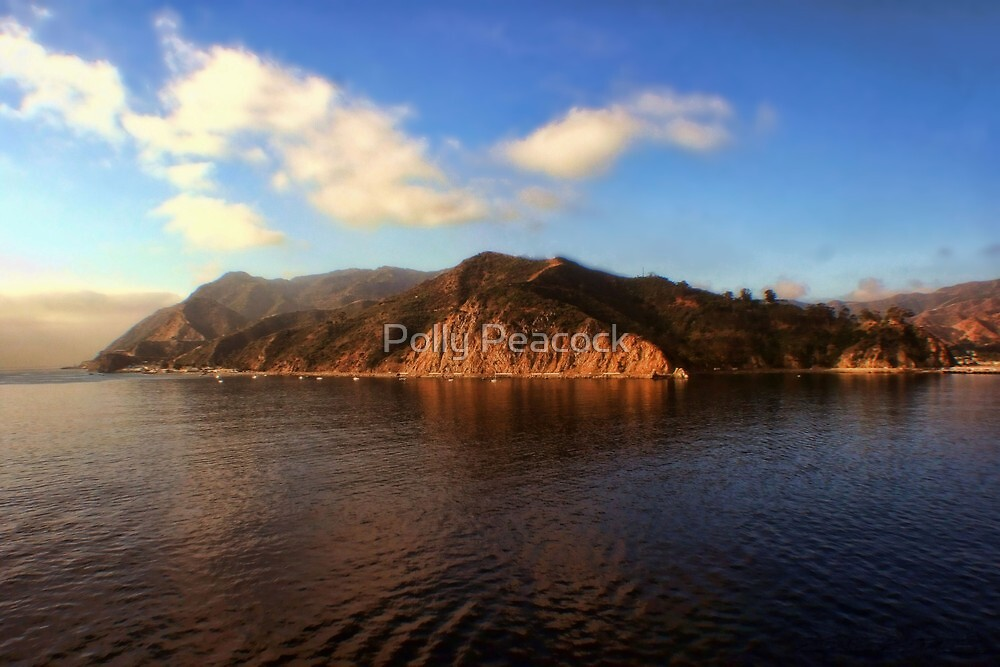 Good Morning Catalina! by Polly Peacock