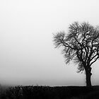 Lone tree in the mist  by yampy
