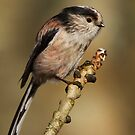 Long-tailed Tit by Neil Bygrave (NATURELENS)