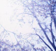 Flowering cherry tree - multiple exposure by intensivelight
