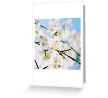 Cherry blossoms and blue sky Greeting Card