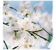 Cherry blossoms and blue sky Poster