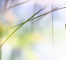 Grass reflected in a lake by intensivelight