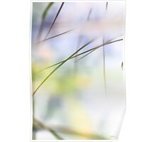 Grass reflected in a lake Poster