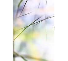 Grass reflected in a lake Photographic Print