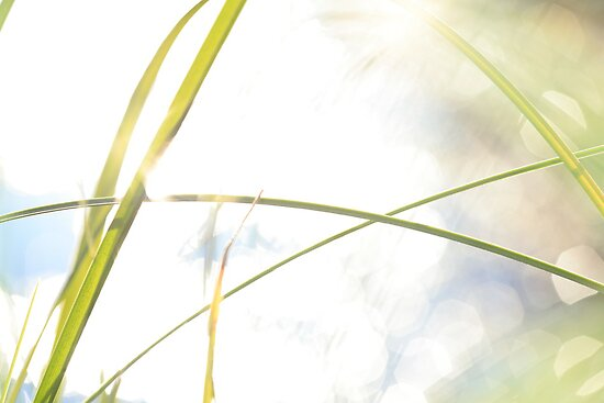 Blades of grass and sun reflections by intensivelight