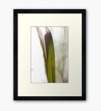 Blade of grass in bright sunshine Framed Print