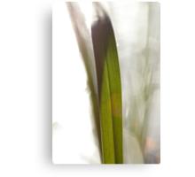 Blade of grass in bright sunshine Canvas Print