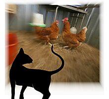 domestic hen Photographic Print