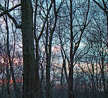 Woodland Sunset by MotherNature