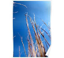 Tall grass reaches for the sky Poster
