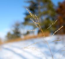 Grass by jjastren
