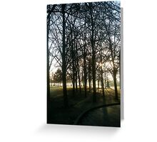 Trees! Greeting Card