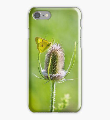 Yellow Sulfur Butterfly Feeding iPhone Case/Skin