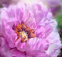 Radiant Orchid Peony by Carol  Cavalaris
