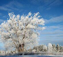 Ice Tree by bradydhebert