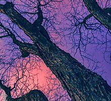 Red Skies by MykeDee