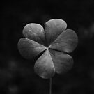 Clover 1 (B/W) by Pandrot