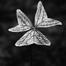 Clover 2 (B/W) by Pandrot