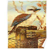 kookaburra on fence Poster