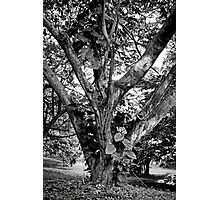Tree Giant  Photographic Print