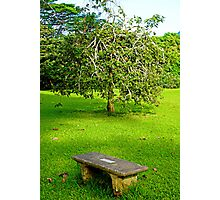 Bench and Tree  Photographic Print
