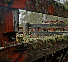 Colorful lichen on cattle pens by myraj