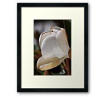 flower-white magnolia Framed Print