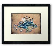 Fish Framed Print