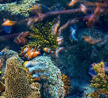 Underwater world by Dobromir Dobrinov