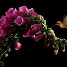 FOXGLOVE AND HUMMINGBIRD by RoseMarie747