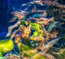 Underwater world by Dobromir Dobrinov