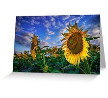 Sunflowers field Greeting Card