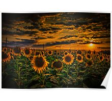 Sunflowers field landscape Poster