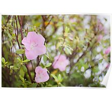 Pink flower Poster