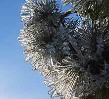 Toronto Ice Storm 2013 - Pine Needle Flowers in the Sky by Georgia Mizuleva