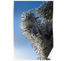 Toronto Ice Storm 2013 - Pine Needle Flowers in the Sky Poster
