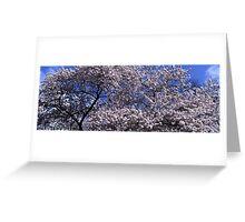 Flowering cherry tree under blue sky Greeting Card