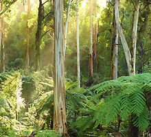 Dawn Lights The Dandenongs, Australia by Michael Boniwell