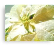 Pale Yellow Poinsettia 1 Angelic Canvas Print