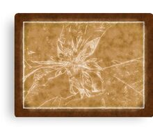 Pale Yellow Poinsettia 1 Outlined Brown Canvas Print