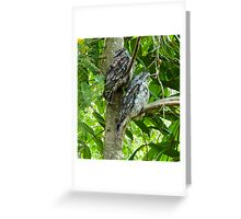 Tawny Frogmouths Greeting Card