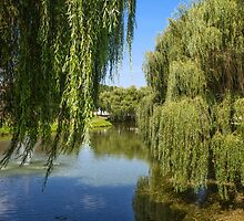 Willow Tree by Dobromir Dobrinov