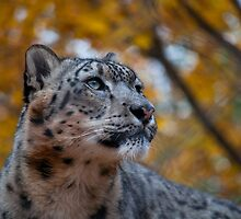 Ready for a Close Up by S. Daniel McPhail