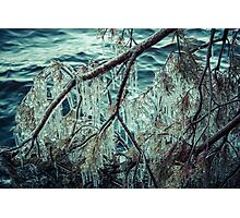Icy Branch Photographic Print