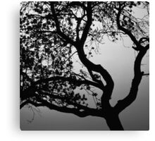 Silhouette of a flowering old apple tree - monochrome Canvas Print
