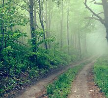 Woodland Fog by Olivia Joy StClaire